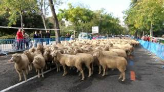 Campoo regresó a la Fiesta de la Trashumancia