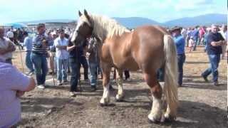 Feria de ganado de San Mateo (Reinosa 2012)
