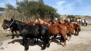 Feria de ganado y de comercio por #SMReinosa2016