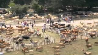 I Feria en Santiurde de Reinosa