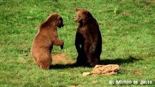 Amor de osos... Parque de la Naturaleza de Cabárceno