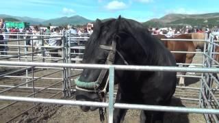 Feria de ganados Reinosa 2013