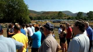 Multitudinaria Feria del Año en Espinilla