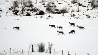 Nieve en el Hayedo de Suano