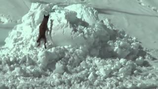 Rescates en la nieve (Alto Campoo)